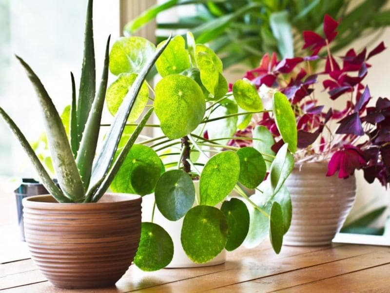 Grow Lights For Indoor Plants